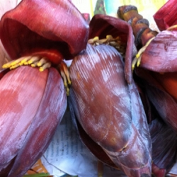 Banana Flower 1 Pcs