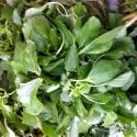 Palak Spinach 1 Pkt