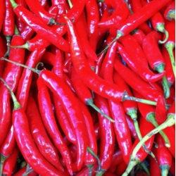 Big Red Chilli 200g