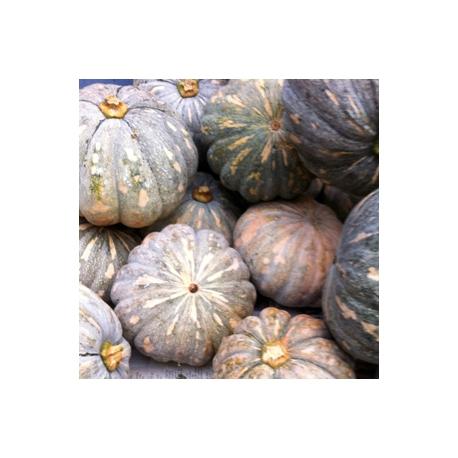 Kaddu Yellow Pumpkin 1 Pcs