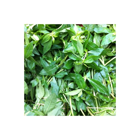 Local Green Spinach 500g