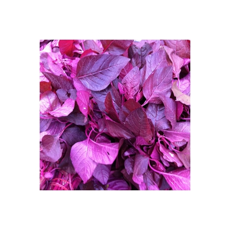 Local Purple Spinach 500g