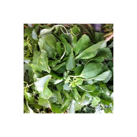 Malaysian Green spinach 500g